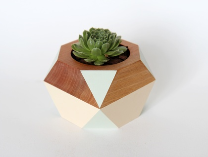 Geometric Wooden Pot with Succulent