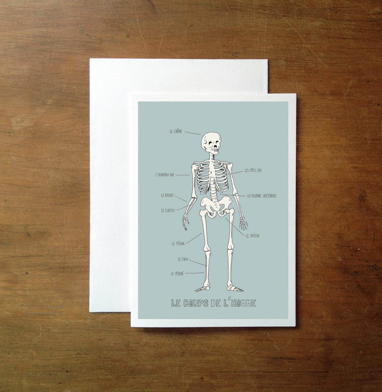 Anatomy In French Greeting Card Felt