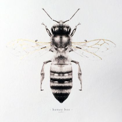 Honey bee illustrated print in A4