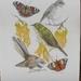 'Kowhai Nurture' Giclee Fine Art Print