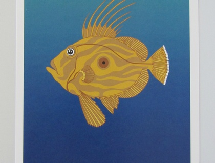 John Dory Fish, Colour A4 Art Print