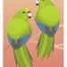 Kakariki A4 Fine Art Print