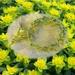 Bracelet: Euphorbia Polychroma (Floral Bouquet range)