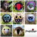 Eight needle-felted decorations - New Zealand birds