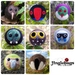 Seven needle-felted decorations - New Zealand birds