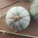 Felted wool pumpkin - green