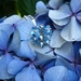 Hydrangea flower cluster pendant, individually glass enamelled sterling silver