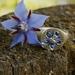 Ceylon sapphire starflower borage signet ring