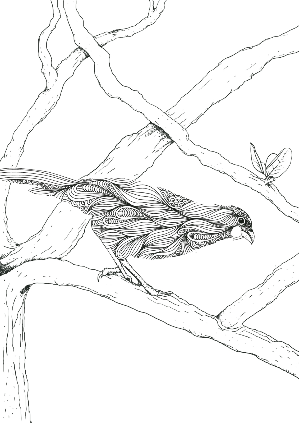 Colouring Pages For Adults Nz : Nz native birds colouring book felt