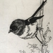 Tomtit/miromiro etching
