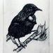 Tui limited edition drypoint etching