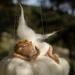 Fairy Sleeping on a Cloud Mobile