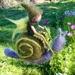 Pixie Riding a Snail