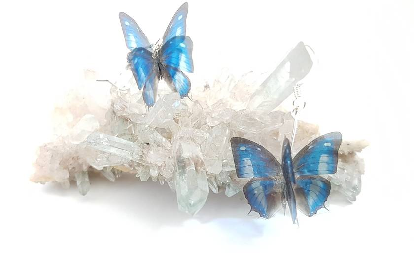 Blue, black and white butterfly earrings