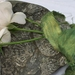 5m plant-dyed recycled sari silk ribbon - Green/Gold