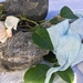 Plant-dyed recycled silk chiffon ribbon 5m - Baby Blue