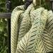 Bright Green Silk Merino Handwoven Scarf