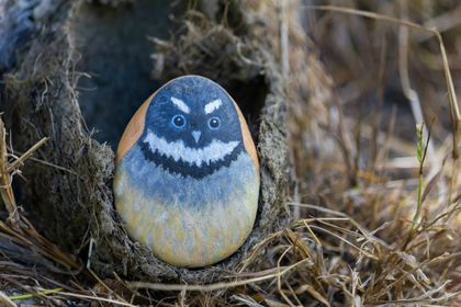 Little Fantail Painted Rock