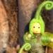 Ponga Fairies (Baby & Girl)