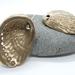 Paua shell in Bronze