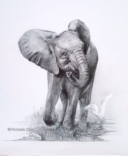 Baby Elephant Drawing Fine Art Print