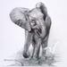 Baby Elephant Drawing Fine Art Print