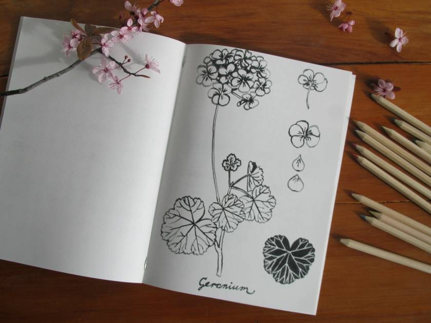 Flowers and Patterns Colouring Book
