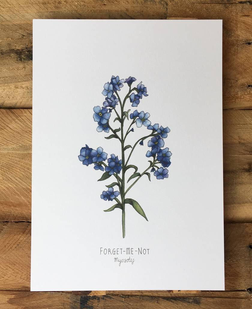 Forget-me-not Print A4