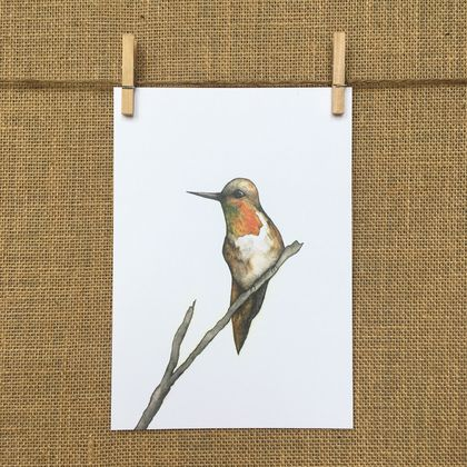 Hummingbird Bird Print A5