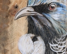 Tui close up - beautiful original art on recycled timber!