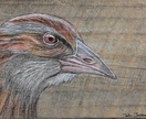 Weka - beautiful original art on recycled timber!
