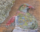 Kereru with lichen - beautiful original art on rustic timber!