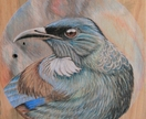 Tui in the round - Original hand drawn Tui on recycled macrocarpa timber