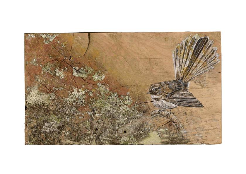 Fantail with Lichen - A4 Print