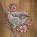 Grey Warbler amongst Manuka Flowers - A4 Print