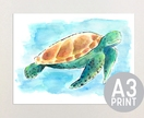 Walter the Turtle - A3 Print of Original Watercolour Painting