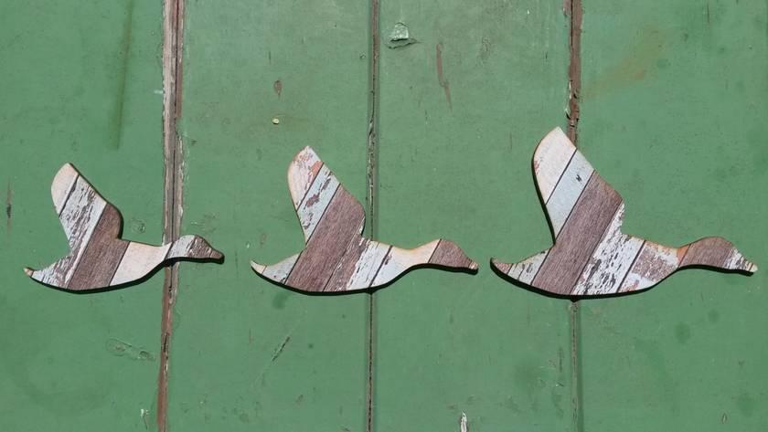 kiwiana wall art