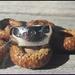 925S Green Sapphire Cigar Band ring