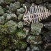 Driftwood fish - small
