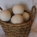 Dryer Balls NZ wool, white