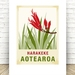 Harakeke illustration. A4 print New Zealand native flower series.