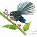 Art Print of  a NZ Native Fantail Bird