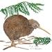 Art Print NZ Kiwi