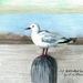 Art Print NZ Sea Gull