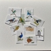 Gift Pack of 10 Assorted Native Bird Cards