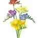 Art Print Colourful Freesias