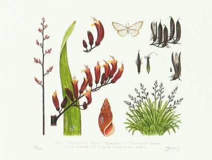New Zealand Flax and Moth - Limited Edition Print