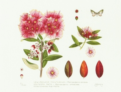 Pohutukawa and Moth - Limited Edition Print