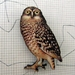 watchful owl brooch
