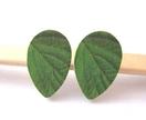 Teardrop wooden stud earrings - leaf